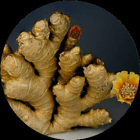 flowering gingerroots