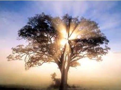sunlight coming through a tree