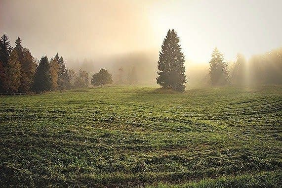 a field with trees and grass in the morning sun